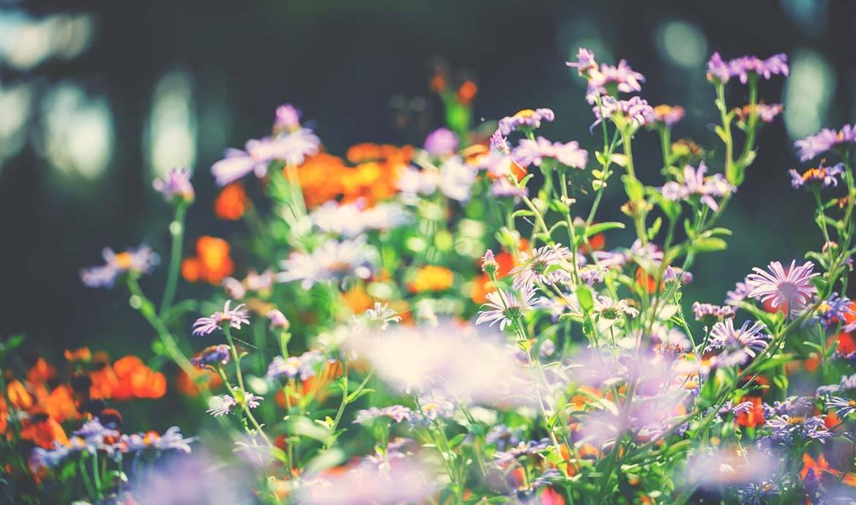 Tout pour un beau jardin d'automne