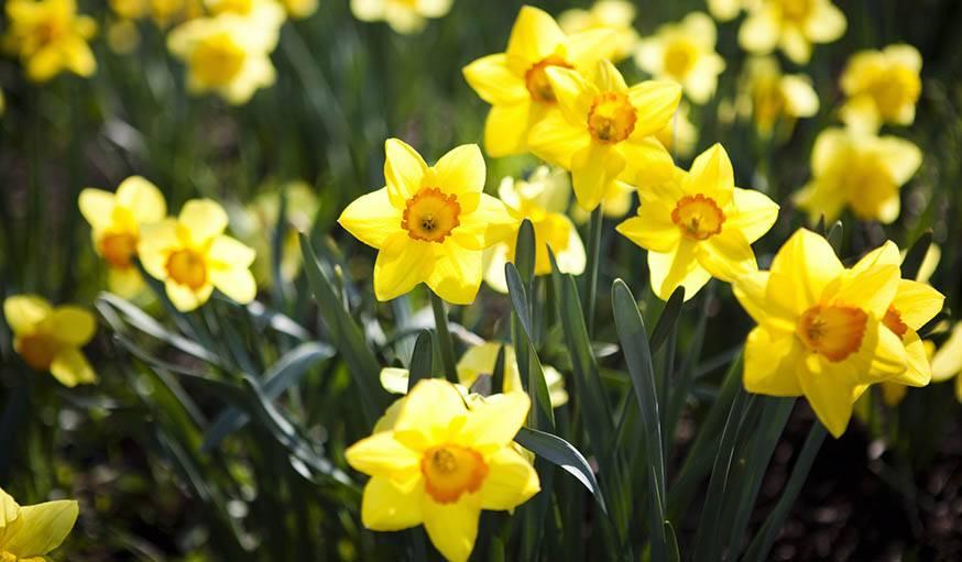 Jardinage les fleurs planter en hiver - Plantes qui ne craignent pas le gel ...