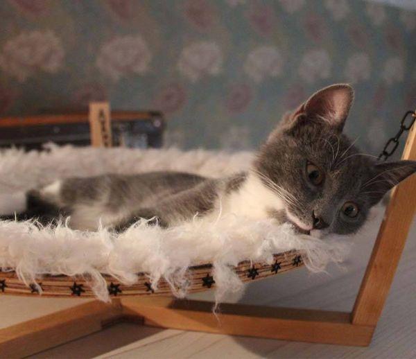 DIY : fabriquez un hamac tout doux pour votre chat