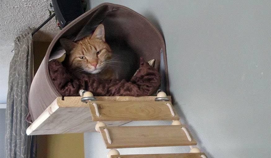 construire un mur pour chat tag re et perchoir pour chat le tutoriel. Black Bedroom Furniture Sets. Home Design Ideas