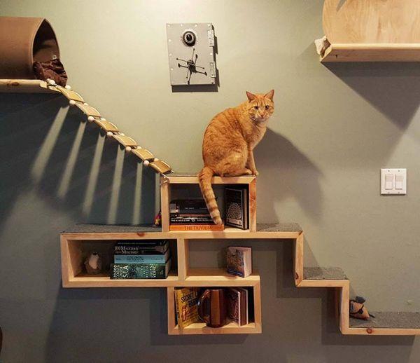 Fabriquez le meilleur jeu pour votre chat : le mur d'aventure