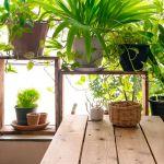 Quelles sont les plantes à avoir chez vous cet hiver pour coller à la tendance ?