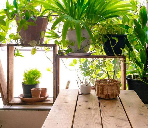 Les plantes tendance à adopter d'urgence