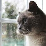 Un ustensile pour viter que votre chat ne sorte de votre - Empecher les chats de venir dans le jardin ...