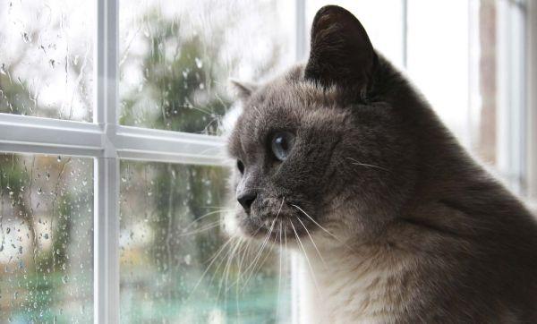 15 idées géniales pour que les chats regardent dehors
