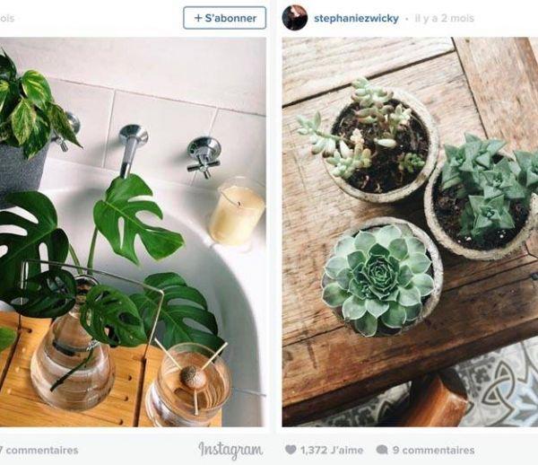 9 astuces pour réussir ses photos Instagram de plantes