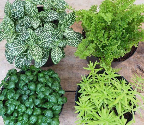 Déco : vos plantes de l'hiver