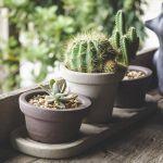 Les cactus sont partout dans la décoration intérieure.