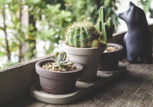 Une Decoration Avec Des Cactus Decoration D Interieur Cactus