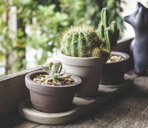 Idée déco : Craquez pour la tendance cactus