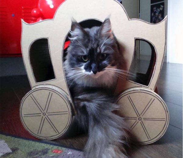 Les Chat-banes : ces drôles de cabanes en carton pour chat