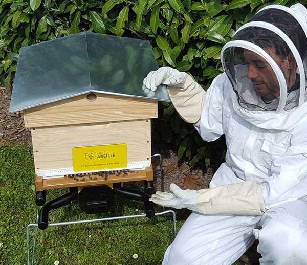 Des ruches connectées pour sauver les abeilles