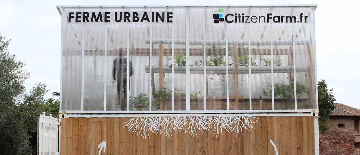 Citizen Farm : quand les poissons font pousser des légumes au coeur des villes