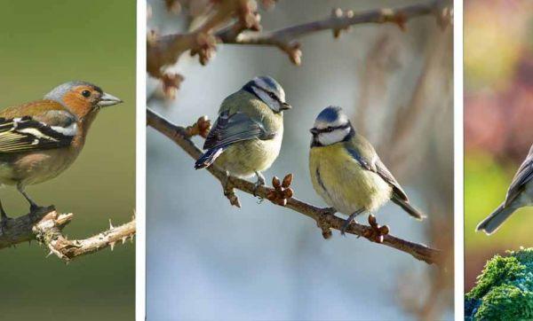 Petit guide pour reconnaitre les oiseaux de votre jardin