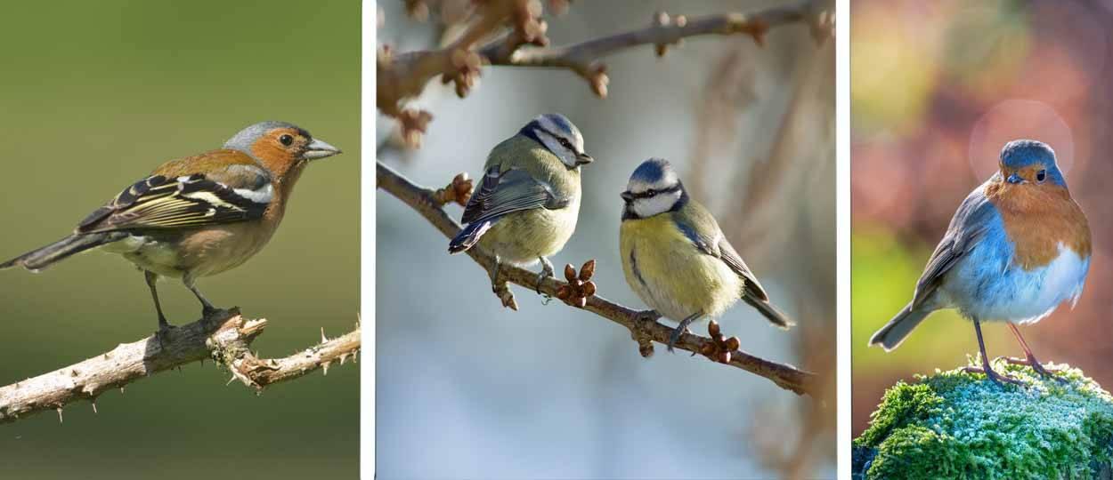 Savoir reconnaître les oiseaux - Quels oiseaux viennent ...