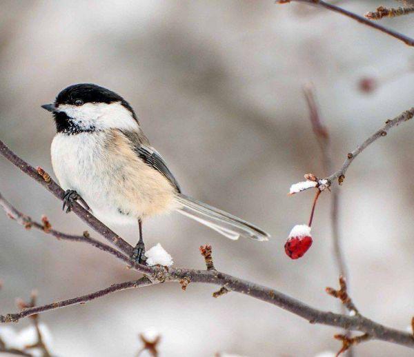 Comment prendre soin des oiseaux du jardin l'hiver ?