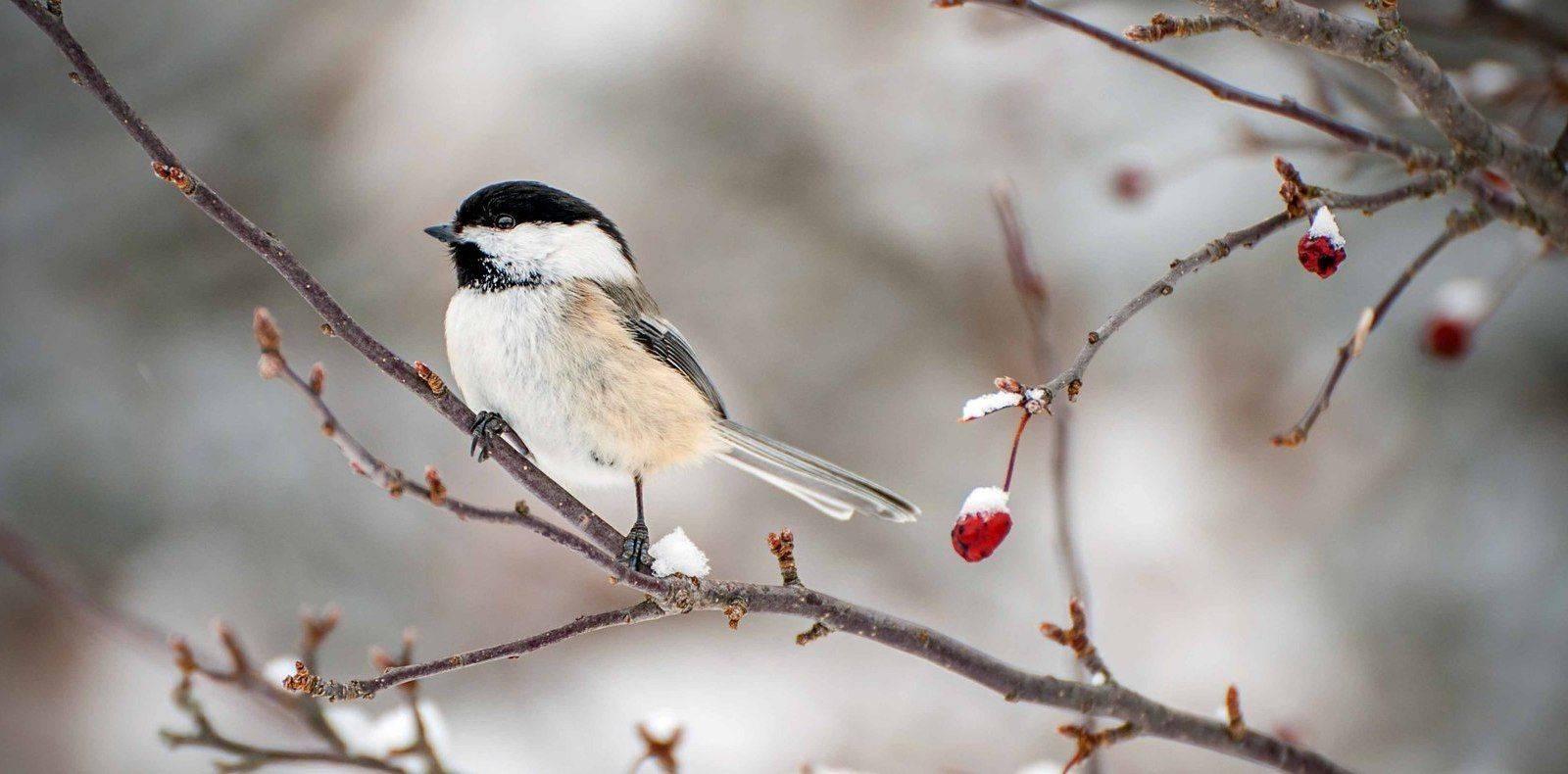 Prendre soin des oiseaux pendant l 39 hiver dans son jardin nourrir les oiseaux du jardin - Comment effrayer les oiseaux ...