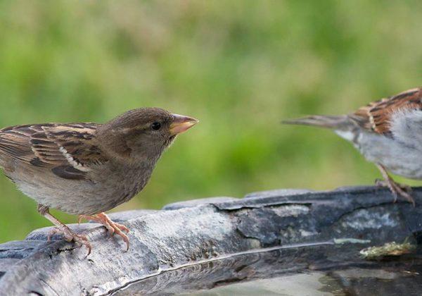 Quels Sont Les Oiseaux Qui Viennent Dans Votre Jardin Recensement Des Oiseaux Des Jardins 18h39 Fr
