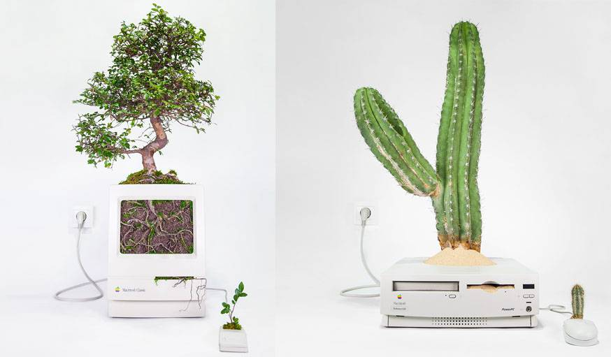 Macbonsaï • Macintosh Classic de 1990 et Ulmus parvifolia de 16 ans. À droite : Macactus • Power Macintosh de 1996 et Isolatocereus dumortieri.