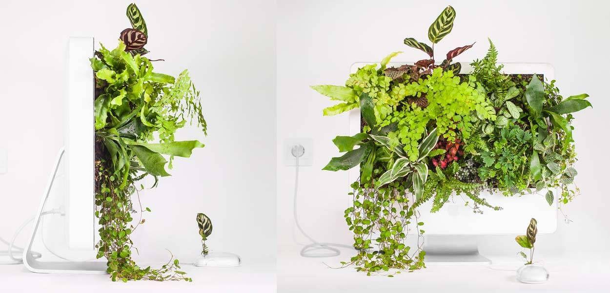 Monsieur Plant transforme les vieux ordinateurs en jardins luxuriants