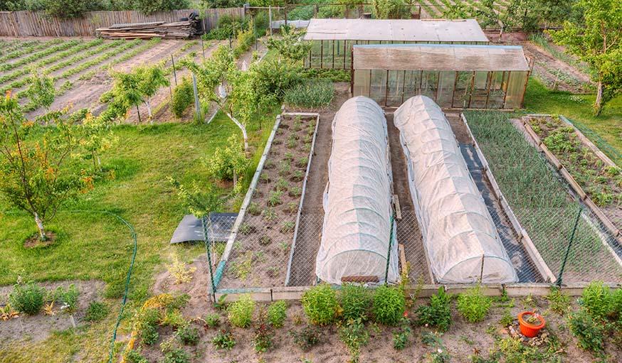 que planter et semer dans son potager en f vrier que planter en hiver. Black Bedroom Furniture Sets. Home Design Ideas