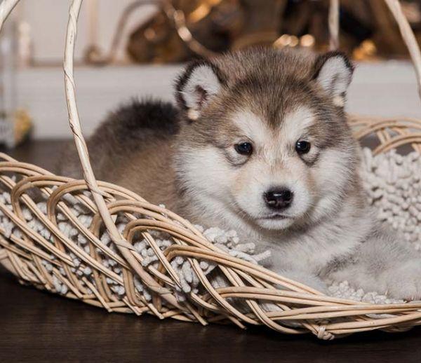 13 idées pour aménager un coin sympa pour son chien