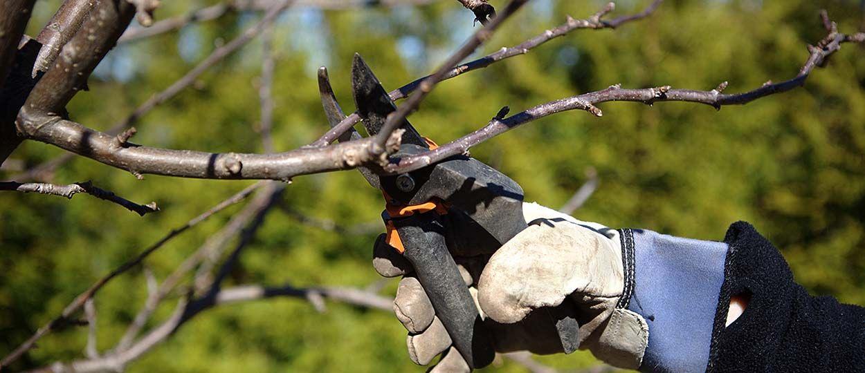 Quand tailler les arbres fruitiers que faire dans son verge en f vrier - Quand tailler arbre fruitier ...