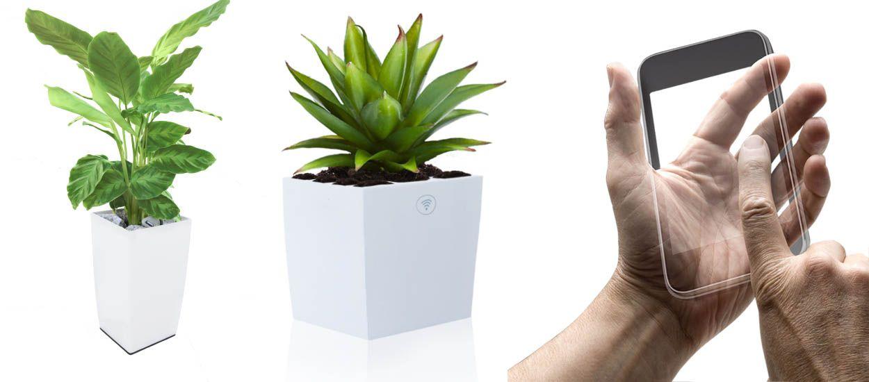 Ces plantes produisent de l'électricité et vous permettent de capter le wifi
