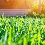 enlever les mauvaises herbes sans herbicide d sherbage colo. Black Bedroom Furniture Sets. Home Design Ideas