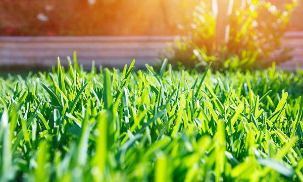 C'est le moment de ressemer votre pelouse : mode d'emploi !