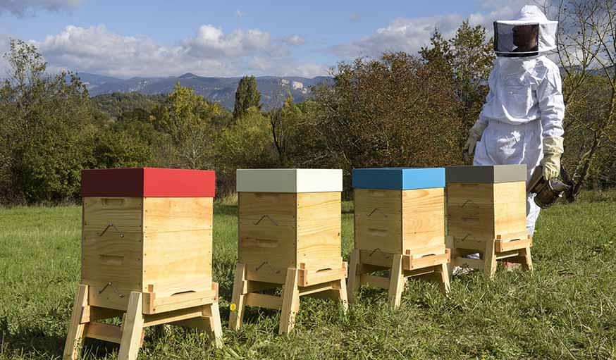 installer une ruche dans son jardin des abeilles dans le jardin ruches made in france. Black Bedroom Furniture Sets. Home Design Ideas