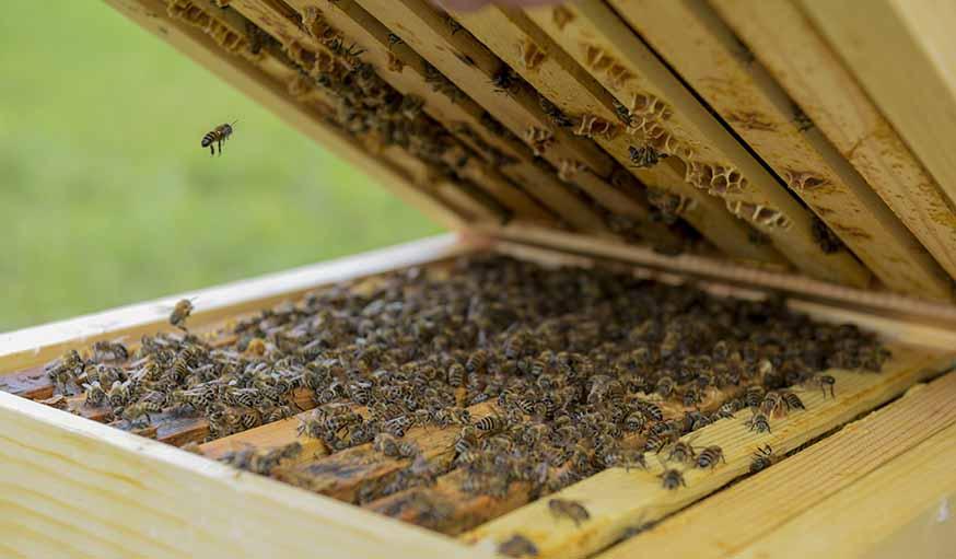 installer une ruche dans son jardin des abeilles dans le jardin ruches made in france. Black Bedroom Furniture Sets. Home Design Ideas