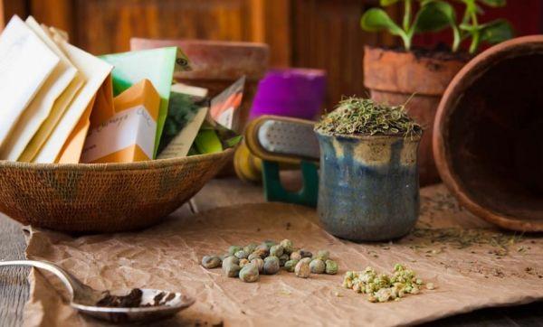 Jardiniers, échangez vos graines pour raviver la biodiversité dans votre potager