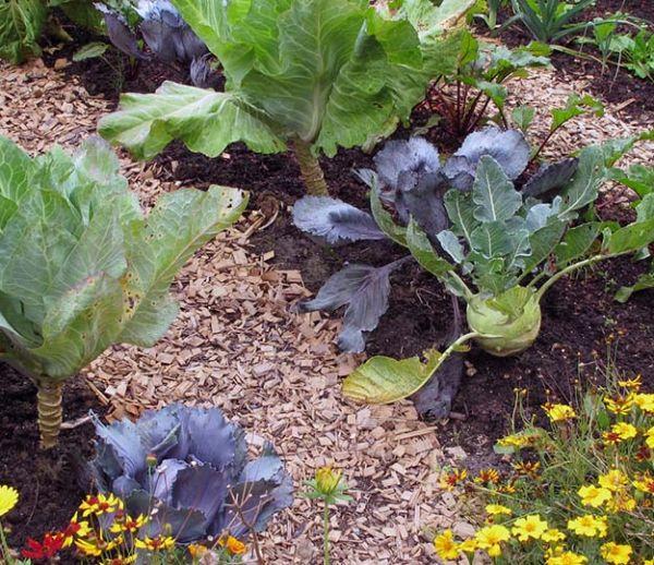 Connaissez-vous ces fleurs qui protègent votre potager des insectes nuisibles ?