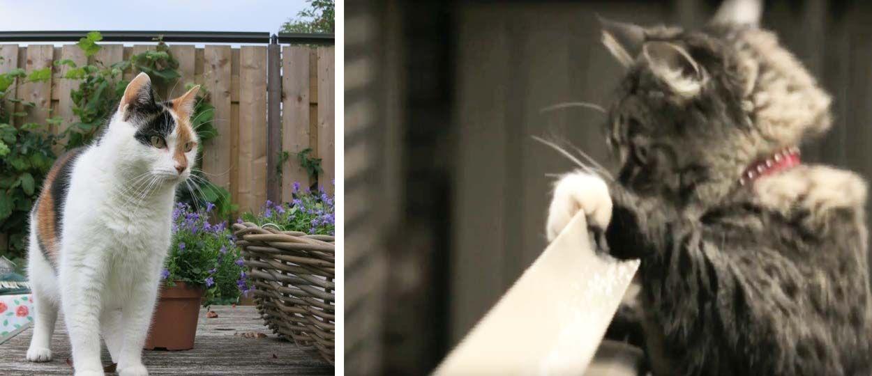 Une super solution pour empêcher votre chat de faire le mur