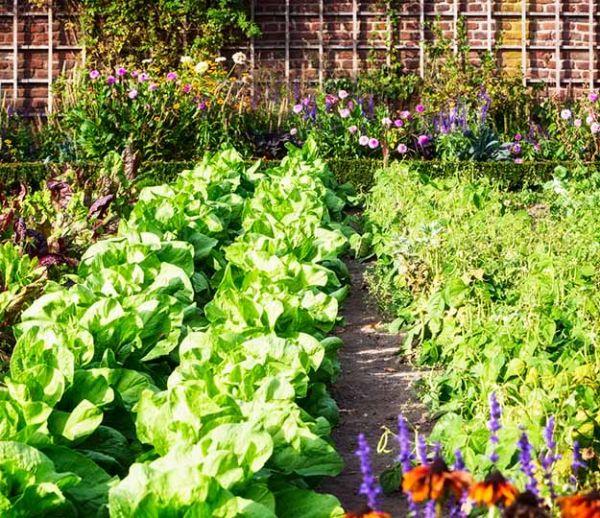 potager durable cultivons notre jardin 18h39. Black Bedroom Furniture Sets. Home Design Ideas