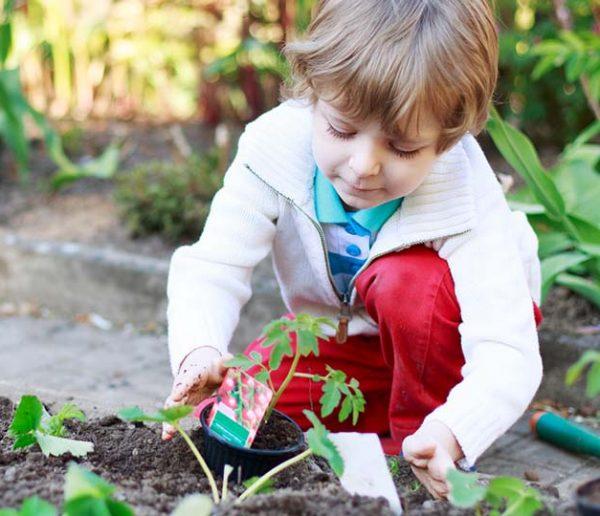 Potager durable : cultivons notre jardin !