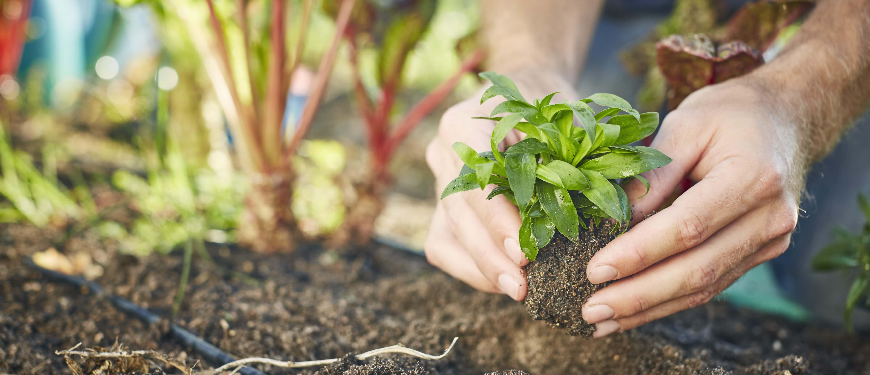 Que Faire Dans Le Potager En Fevrier que planter dans son potager au printemps - légumes à