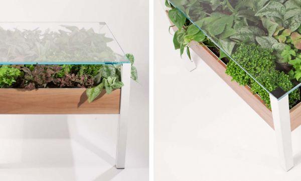 Un jardin d'intérieur dans votre table basse