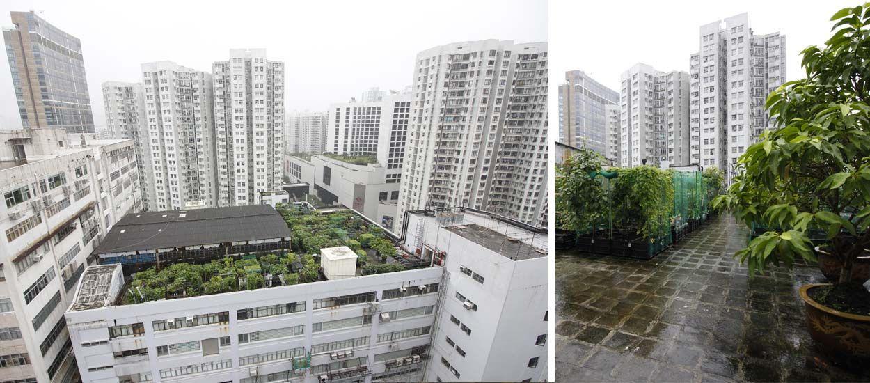 Hong Kong : Rencontre avec les jardiniers des gratte-ciel