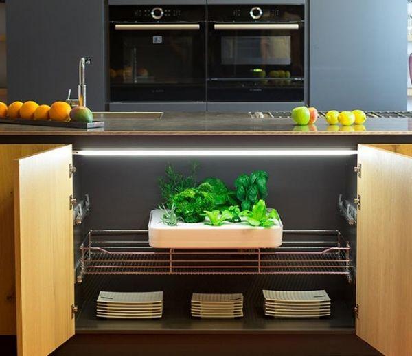Cultiver 20 kg de salade par an dans sa cuisine, sans lever le petit doigt, ou presque