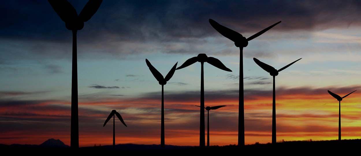 Une start-up s'inspire des ailes du colibri pour créer une éolienne