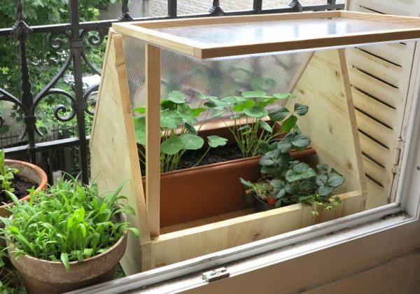 Fabriquez une mini serre en polycarbonate pour cultiver sur ...