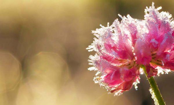 Saints de glace : conseils avisés pour les jardiniers