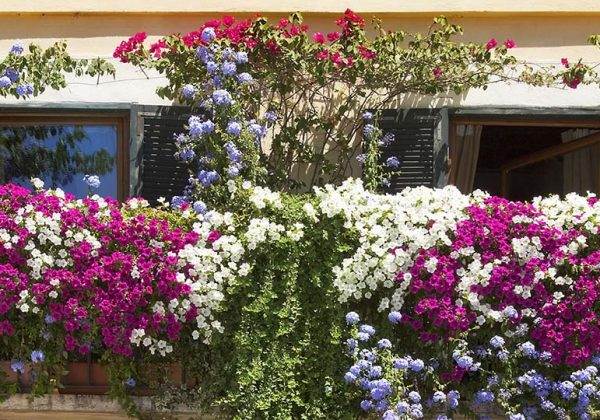 Quelles Plantes Choisir Pour Cacher Son Balcon De La Vue Des