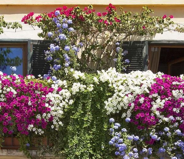 10 plantes pour mettre votre balcon à l'abri des regards