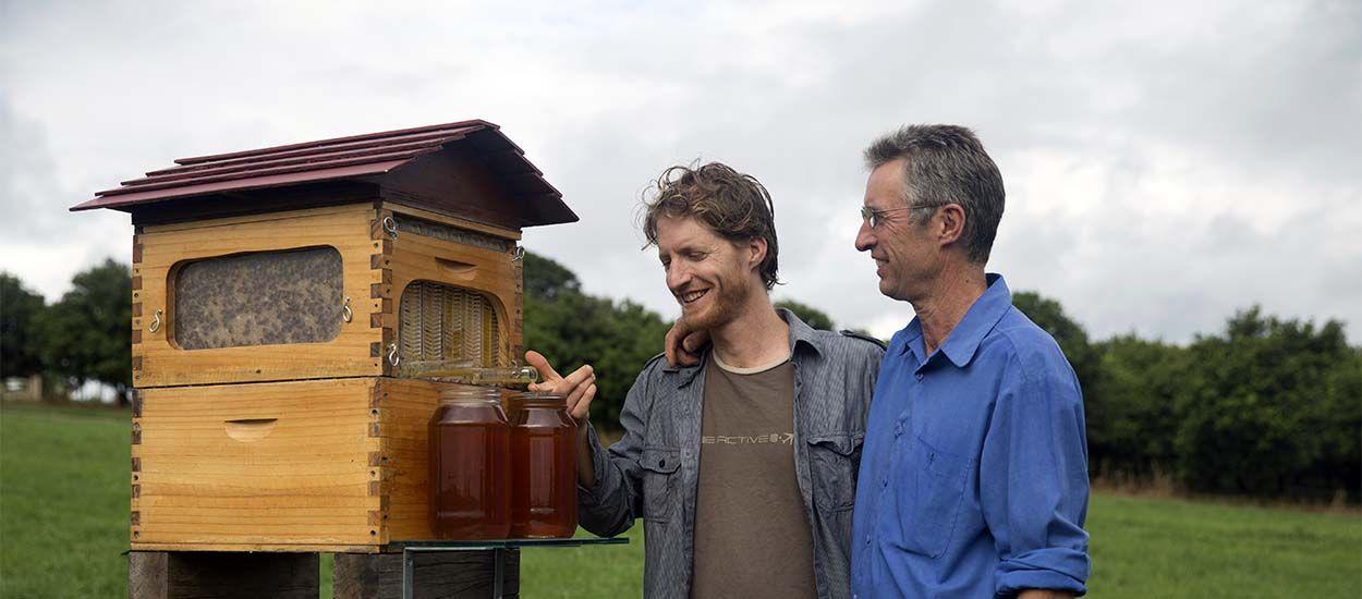La ruche à robinet, pour récolter le miel sans déranger les abeilles