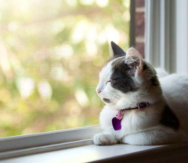 Comment protéger vos animaux de compagnie de la chaleur ?