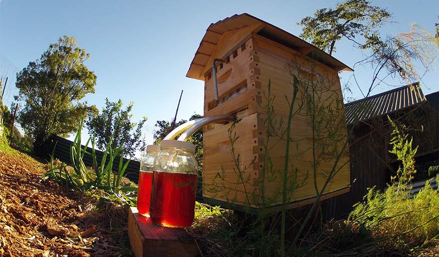 flow hive la ruche robinet une bonne id e pour prot ger les abeilles. Black Bedroom Furniture Sets. Home Design Ideas