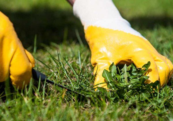 Enlever les mauvaises herbes sans herbicide - Désherbage ...